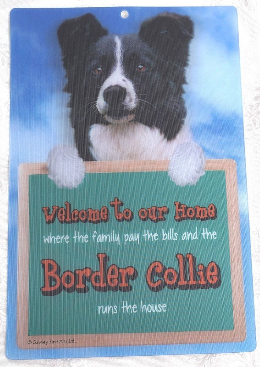 BORDER COLLIE 3D WELCOME SIGN STUNNING EYE CATCHING 23CM X 15CM SIGN